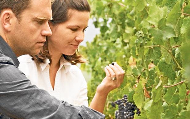 Mullineux wijnen