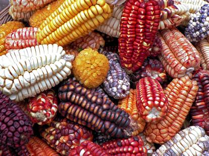 Trend: de keuken van Peru!